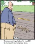 Comic Strip Jerry Van Amerongen  Ballard Street 2012-06-13 squirrel